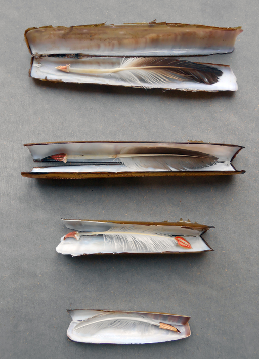 razor quills 72